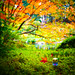 Deep Autumn has come, Japanese maple leaves are becoming truly red in Vancouver BC Canada by TOTORORO.RORO