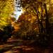 The Autumn Road by Chizuka2010