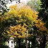 Fall yellow, 10/19/16
