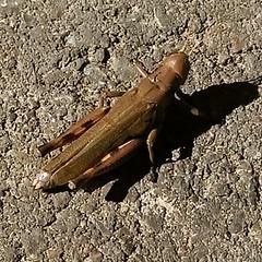 #grasshopper he was #tasty