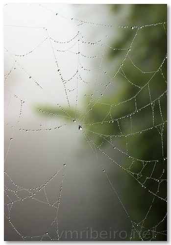 Web drops by VRfoto