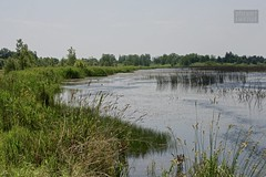 polder(0.0), reservoir(0.0), fish pond(0.0), mudflat(0.0), shore(0.0), waterway(0.0), fen(1.0), wetland(1.0), swamp(1.0), floodplain(1.0), river(1.0), natural environment(1.0), salt marsh(1.0), pond(1.0), bog(1.0),