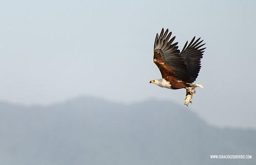 Kenya - Lake Baringo 14