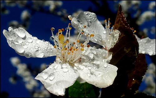christal de fleur