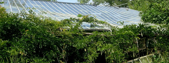 This greenhouse, built over an underground house, is being supported by/destroyed by wisteria and fig. The indentation in the glass roof exists. The photo has been modified with Gimp's warp filter to exaggerate its depth.