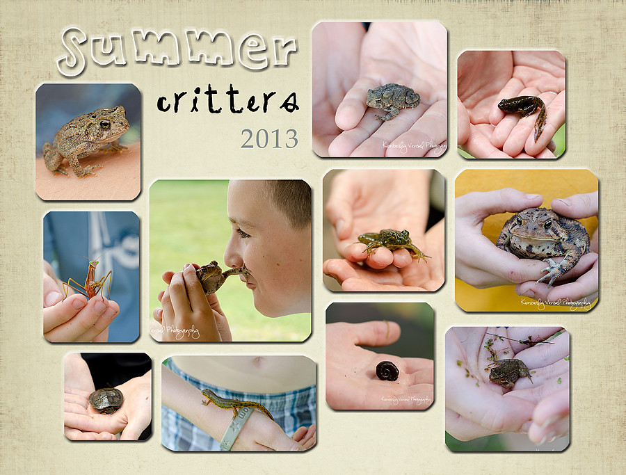 summer-critters-collage