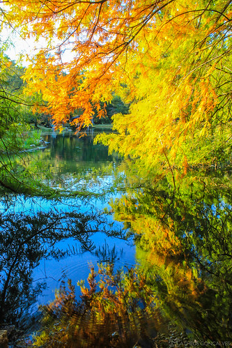 lake fall nature water água lago virginia reflex natureza richmond outono rva reflects maymont rvaallday