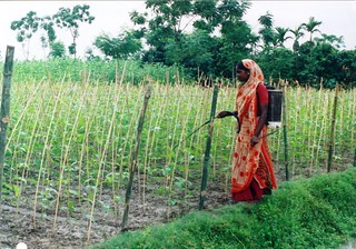 Laily, a member of BRAC's Challenging the Frontiers of Poverty Reduction program, taking care of her nursery that lifted her out of poverty, Bangladesh 2008. Photo: BRAC