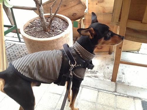 道行く人を監視中の黒犬@Say Cheese!