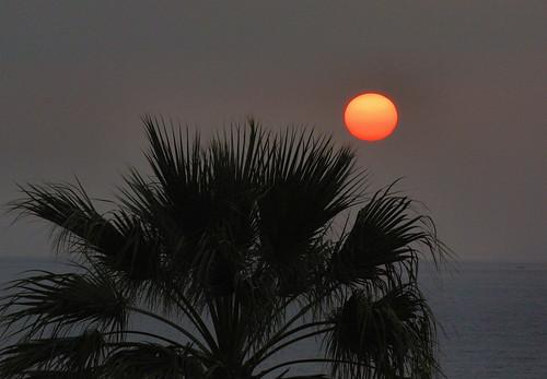 sunset sea sun meer sonnenuntergang kati sonne nikon1v1 palmepalme