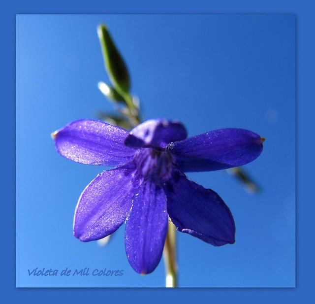 Flickr violeta de mil colores for De mil colores