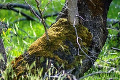 Moss growing on tree