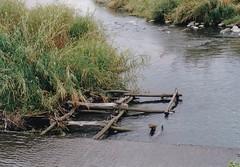 萬長春水路古老的格框工法淨化水質,增加魚貝類的棲地。(攝影:張文亮)
