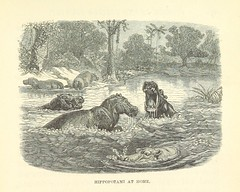 "British Library digitised image from page 225 of ""Stories of the Gorilla Country, etc"""