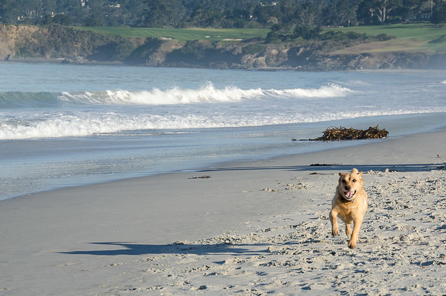 Carmel-by-the-Sea: The best dog friendly beach in California