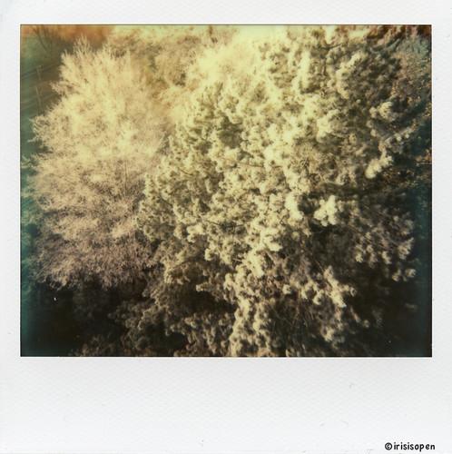 Deutschland # Germany # Raureif # Polaroid_Image_Format - Polaroid Image System Impossible Color - 2013