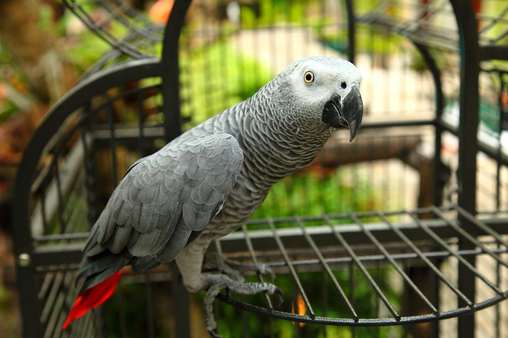 Burasari-Bird