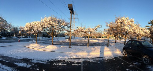 Winter in Herndon
