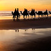Broome Camels 1 ETF-9010