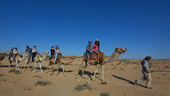044_Dafna Tal_NEGEV_Camels_IMOT
