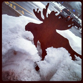 #moose spotting in #Maine #snow