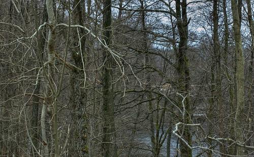 wood trees winter forest river landscape 50mm grey tm stems trunks marl deciduousforest västragötaland viskan björketorp sjuhärad