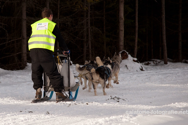 Cupa Beliș 2014 - primul concurs de atelaje canine desfășurat vreodată în județul Cluj  12287765294_089ece9e10_z