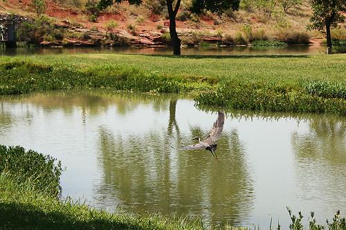 heron lakenasworthy