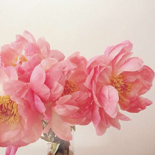 Welcome To The Week: Blossoming Peonies