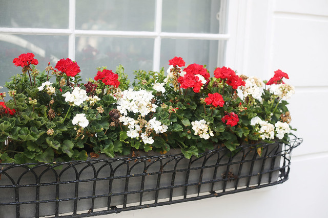 Red and white flower bed