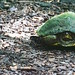 Ojibway Park Turtle by SoVeryVibrant