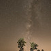 CHOLLA & MILKY_8105741 by captured by bond