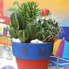 Mini #cacti #containergarden planted in a 4inch clay pot. #Cactus
