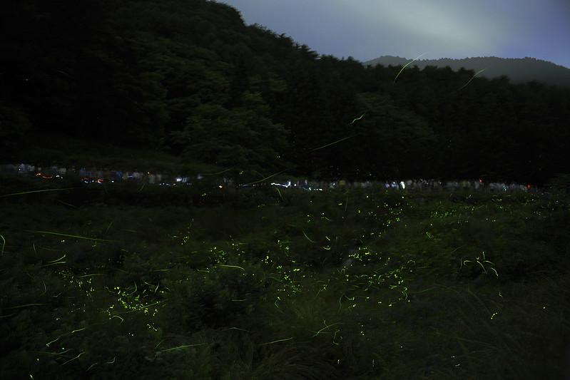 Firefly,Tatsuno NAGANO 2013