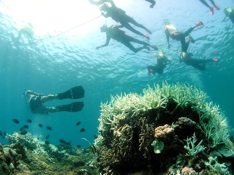 墾丁海域珊瑚礁白化。雖然珊瑚大量白化,但是民眾缺乏保育的認知,仍持續進行浮潛的遊憩活動,嚴重影響珊瑚的生存。