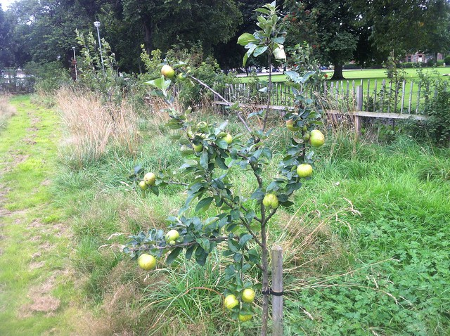 Leith Links Children's Orchard August 2013