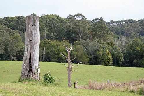 20130822_0844 old tree trunk