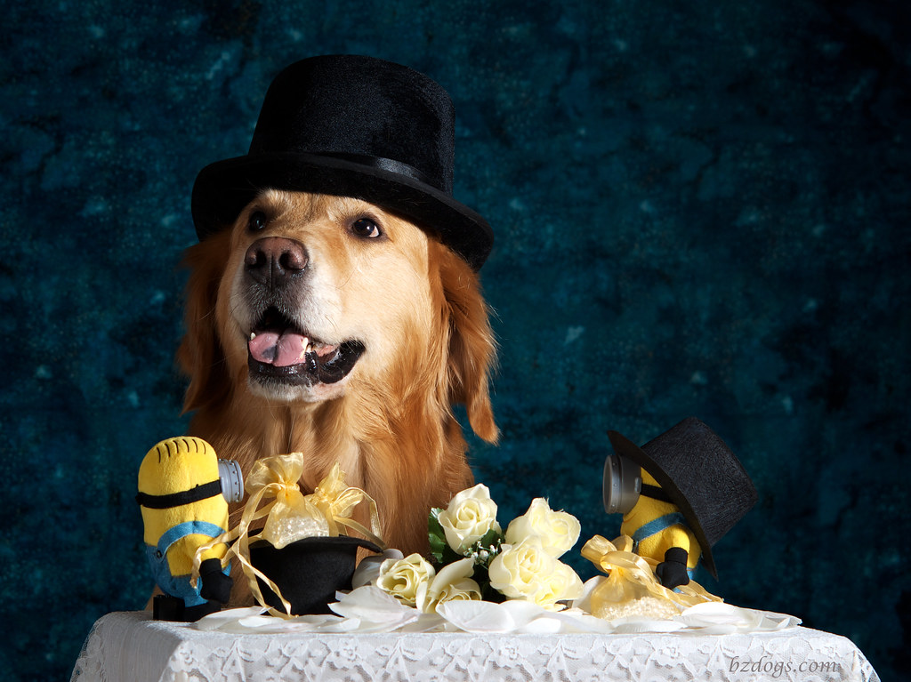 Wedding Heist?