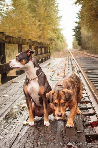Train Tracks-9524