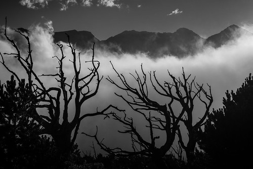 frontrange indianpeaks treeskeleton niwotridge upslope arapahopeaks southernrockymountains