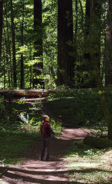 05Jul2013_redwoods-2620