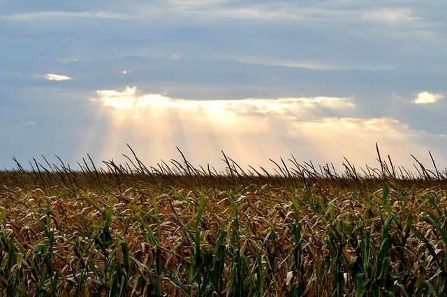 corn fields and sky
