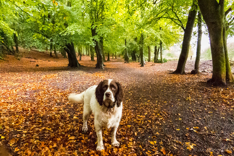 Max in the Woodland Walk