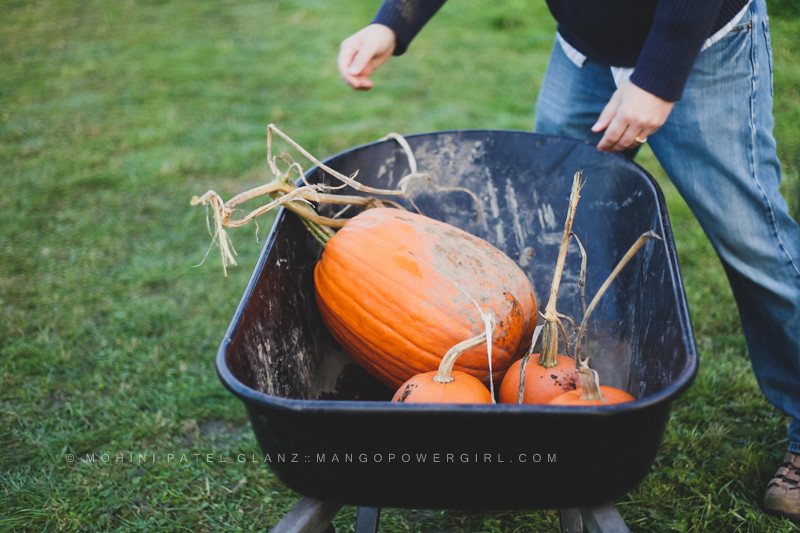 loading pumpkin in a wheelbarrow