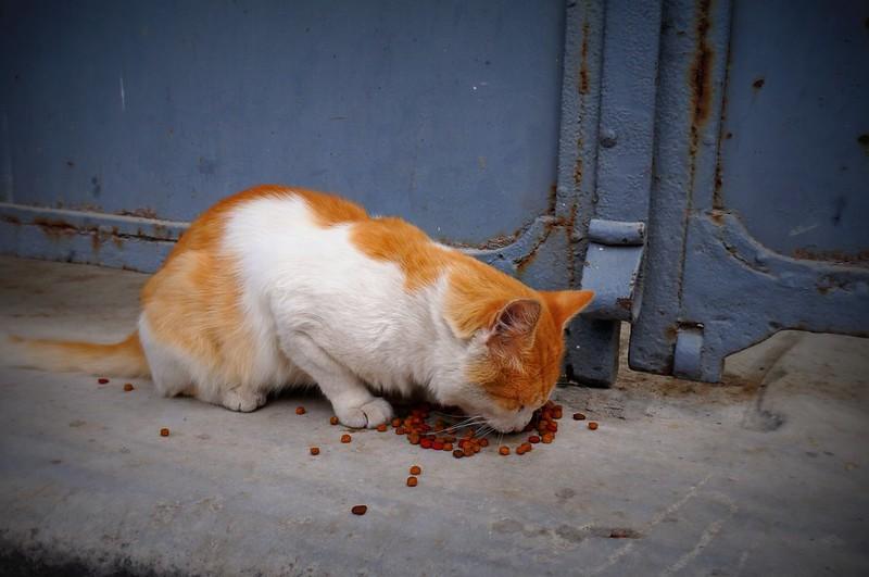 Stray-Cats-Istanbul-(15)