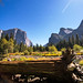 Fallen in Yosemite Valley