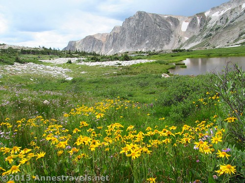 Wildflowers along the Lakes Trail, returning to Lake Marie, Medicine Bow National Forest, Wyoming