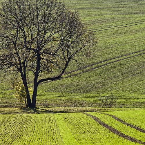 autumn light shadow color green leave field leaves canon germany deutschland thüringen herbst thuringia blätter bunt ef70200mmf4lisusm canoneos5dmarkii