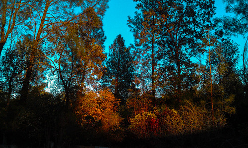 california autumn trees sky fall nature forest landscape photography october scenery scenic trail redding