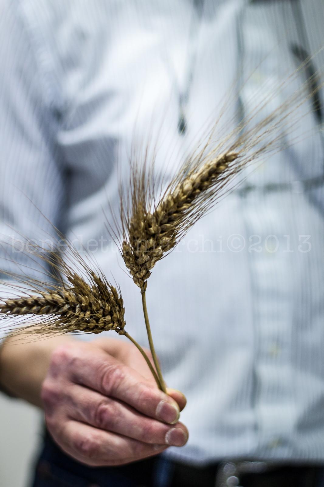 IMPASTANDOsIMPARA molino grassi grano del miracolo